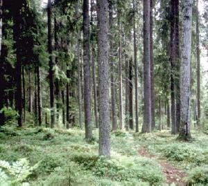 Northern Woodlands